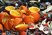 Oranges in Compost